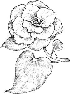 Camellia-flower-coloring-pages-5