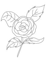 Camellia-flower-coloring-pages-6