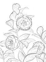 Camellia-flower-coloring-pages-9