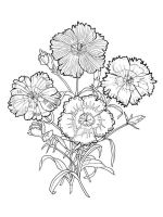 Carnation-flower-coloring-pages-1