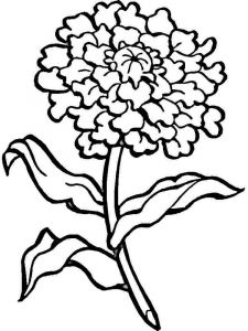 Carnation-flower-coloring-pages-10