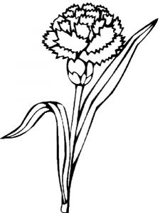Carnation-flower-coloring-pages-2