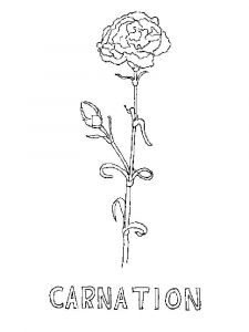 Carnation-flower-coloring-pages-3
