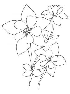 Columbine-flower-coloring-pages-10