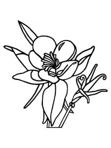 Columbine-flower-coloring-pages-11