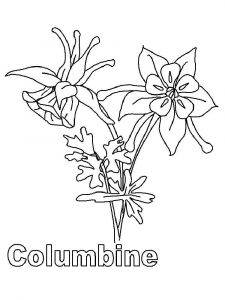 Columbine-flower-coloring-pages-4
