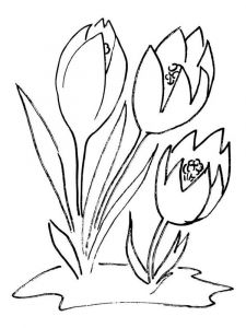 Crocus-flower-coloring-pages-7