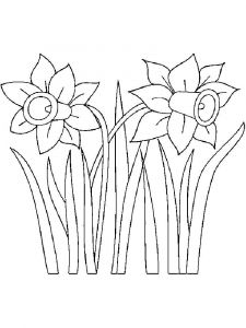 Daffodil-flower-coloring-pages-12
