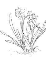 Daffodil-flower-coloring-pages-13