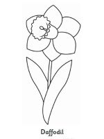 Daffodil-flower-coloring-pages-2