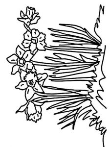 Daffodil-flower-coloring-pages-4