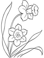 Daffodil-flower-coloring-pages-8