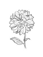 Dahlia-coloring-pages-12