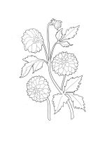 Dahlia-coloring-pages-15