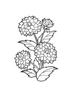 Dahlia-coloring-pages-16