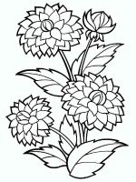 Dahlia-flower-coloring-pages-2