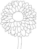Dahlia-flower-coloring-pages-4
