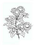 Daisy-flower-coloring-pages-10