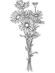 Daisy-flower-coloring-pages-3