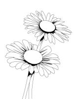 Daisy-flower-coloring-pages-4