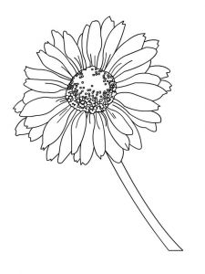 Daisy-flower-coloring-pages-9
