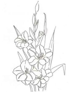 Gladiolus-flower-coloring-pages-2
