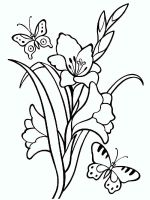 Gladiolus-flower-coloring-pages-4