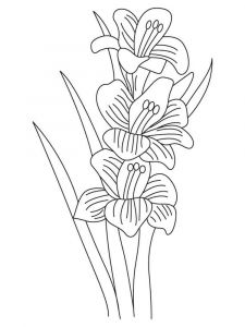 Gladiolus-flower-coloring-pages-7