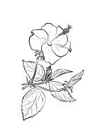 Hibiscus-coloring-pages-12