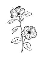 Hibiscus-coloring-pages-15