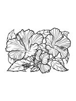Hibiscus-coloring-pages-17