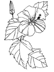 Hibiscus-flower-coloring-pages-10