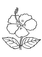 Hibiscus-flower-coloring-pages-11