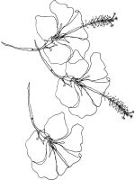 Hibiscus-flower-coloring-pages-5