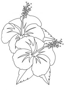 Hibiscus-flower-coloring-pages-6