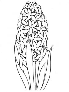 Hyacinth-flower-coloring-pages-1