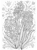 Hyacinth-flower-coloring-pages-3