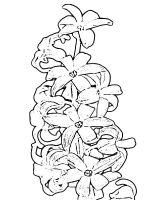 Hyacinth-flower-coloring-pages-5