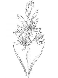 Hyacinth-flower-coloring-pages-7