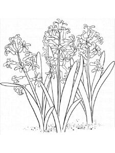 Hyacinth-flower-coloring-pages-8