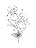 Iris-coloring-pages-16