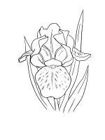 Iris-coloring-pages-18