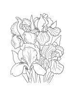 Iris-coloring-pages-23