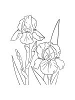 Iris-coloring-pages-24
