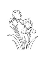Iris-coloring-pages-26