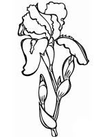 Iris-flower-coloring-pages-10
