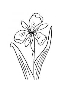 Iris-flower-coloring-pages-15