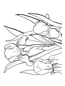 Iris-flower-coloring-pages-4