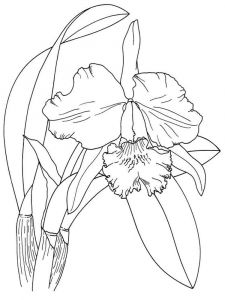 Iris-flower-coloring-pages-6