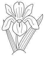 Iris-flower-coloring-pages-9